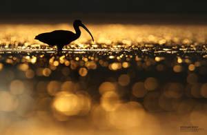 Glossy bird in glossy world by BogdanBoev