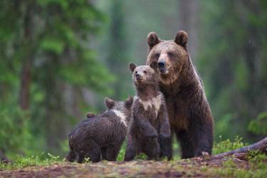 Family by BogdanBoev