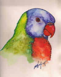 Parrot by mrshan