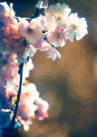 Hanging Blossoms by digital-pat