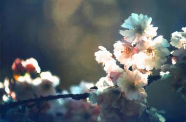 Cherry Blossom Zen by digital-pat