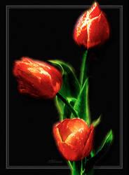 Red Tulips on Black by digital-pat