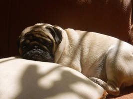 Lazy Pug Carlino by DISMOTRON