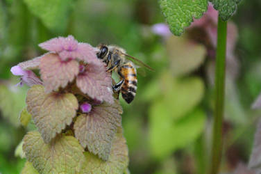 Bee by shineslikethesun