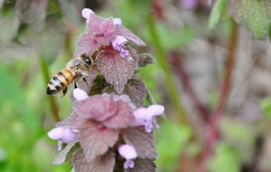 Bee 2 by shineslikethesun