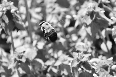 Bee 3 by shineslikethesun