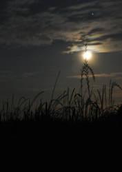 Midnight Moon by shineslikethesun