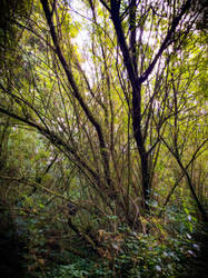 Willow Forest by bulldogstoy
