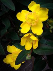 Yellow Bits by bulldogstoy
