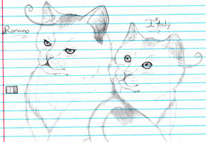 realistic cat Italy and Romano by nightwindwolf95