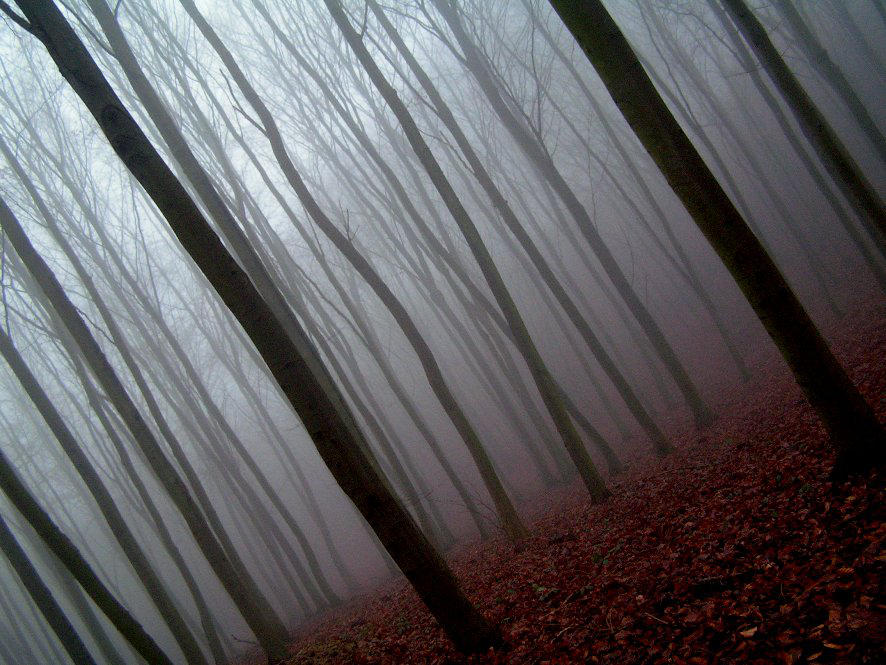 fog in forest by EtanOlka