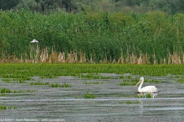 Danube Delta nature 3 by sypfoto