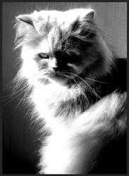 Cat by DMi