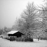 white... by tolgagonulluleroglu