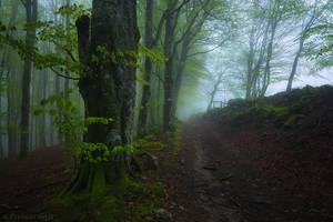 Those Foggy Days by LG77
