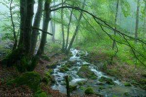 Green Moisture by LG77