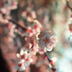 Bouquet by nnivrim