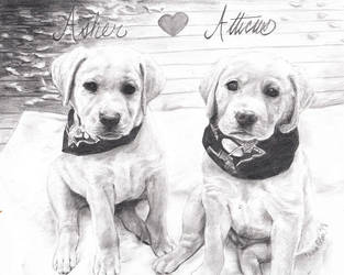 Asher and Atticus by avaunt
