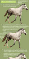 Horse Hair Painting Tutorial by romino4000