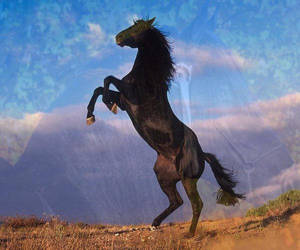 Black Stallion by Sammsy