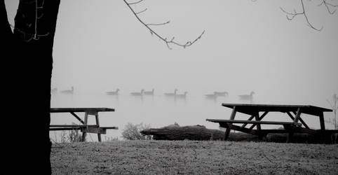 Geese in the frozen morning fog by Colliwolf