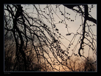 Sunset Branches by Qutey