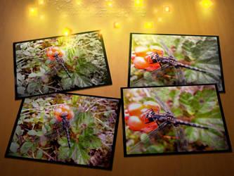 Dragonflies among cloudberries by FrusenFisk