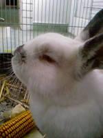 Bunny by szundisziszi