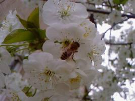 little bee by szundisziszi