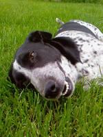 Dog smile by szundisziszi