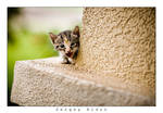 Baby kitty... by sergey1984