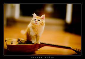 Cat and Balalaika by sergey1984