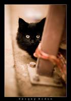 Black Kitty... by sergey1984