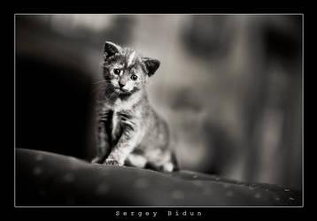 I'm a BiG CAT.... by sergey1984