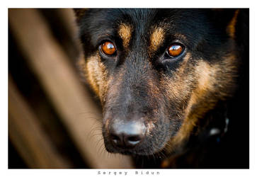 Eyes can tell a lot... by sergey1984