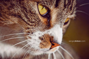 Ah This Yellow Eyes.. by sergey1984