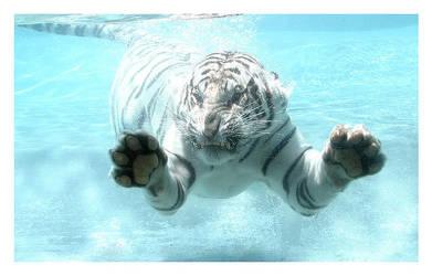 Big Fish or White Tiger. by sergey1984