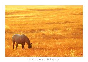 Horse... by sergey1984