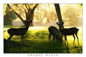 Deers by sergey1984