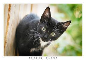 Kitty 2... by sergey1984