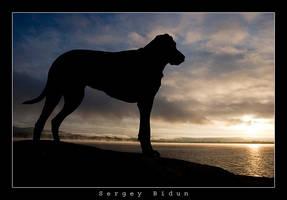 Dog and Sunrise. by sergey1984
