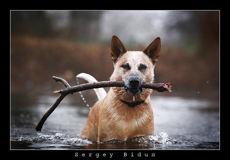 The Dog... by sergey1984