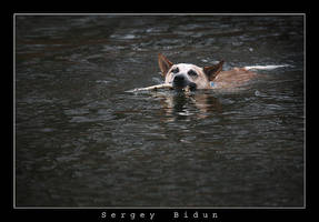 Swimmer by sergey1984