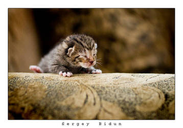 Just born Kitty... by sergey1984