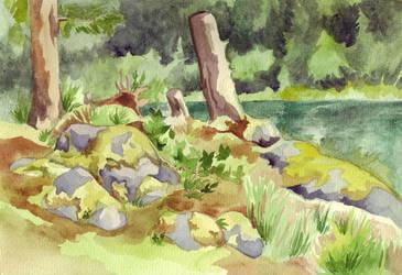 Quadra Island - Forest by Vidyala