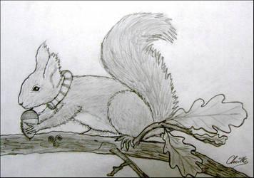 Celtic sqirrel by Keirouak