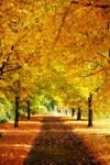 Autumn's Days by Squirrelondope