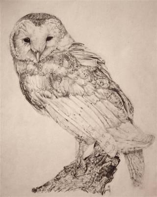 Barn Owl by maysonmonroe