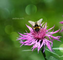 lady bee by l-CoRaLiNe-l