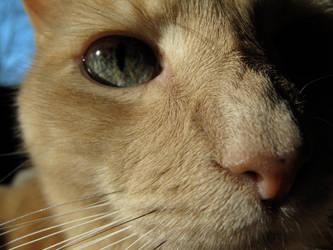 Bailey up close by recentrunes